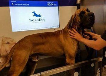 Wash Dog Osowa - nowość: myjnia samoobsługowa !!!