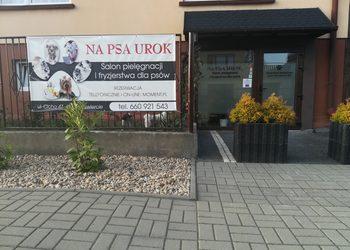 Monika Kumor NA PSA UROK Salon pielęgnacji i fryzjerstwa dla psów