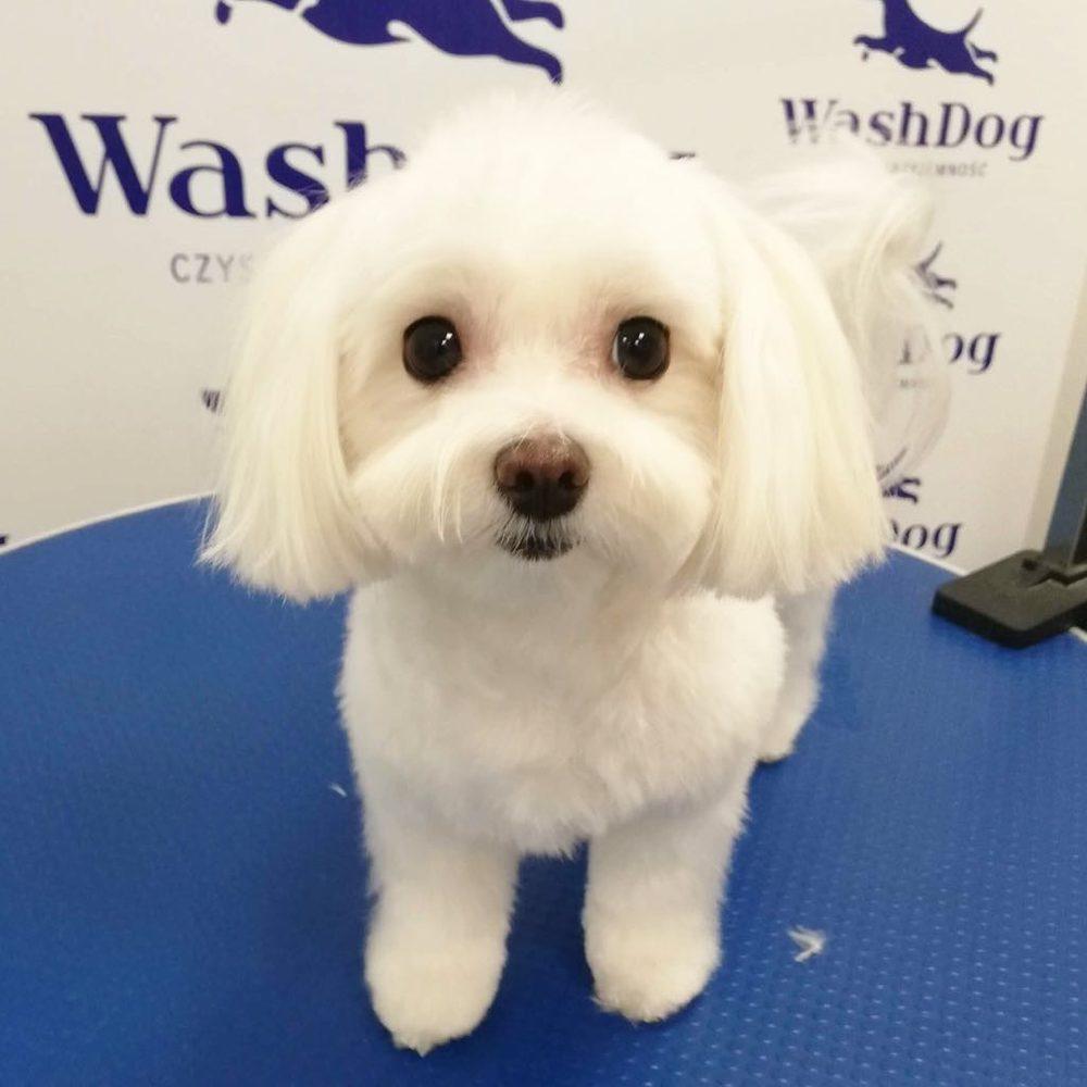 Wash Dog Osowa - galeria zdjęć